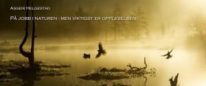 2015_Asgeir_vinnerbilde